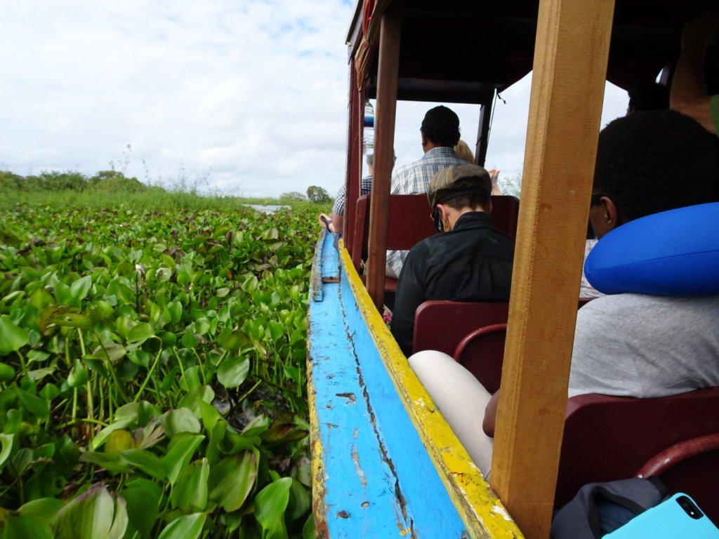 Le bateau se fraie un passage à travers les plantes aquatiques